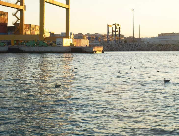 Pájaros en el agua del puerto